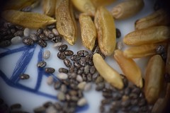 Chia Seeds with Kamut (Tanja-Milfoil) Tags: gesundesfrühstück müslischale memberschoicefoundinthekitchen foundinthekitchen oldancientgrain nahaufnahme mm d5300 nikond5300 nikon dcr250 raynox getcloser closer macromonday macromondays tanja urweizen urkorn weizen kamut breakfast cerealbowl seeds samen chia