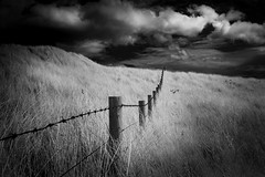 Sneak (ghostedout) Tags: grass dunes landscape east seahouses mono windy white dramatic ir texture marram seaweed sea beach ocean infrared black north england northumberland sky monochrome clouds coast uk fence unitedkingdom gb