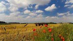 Summer (YᗩSᗰIᘉᗴ HᗴᘉS +7 000 000 thx❀) Tags: summer moisson campagne hss sliderssunday campaign sky clouds landscape hensyasmine
