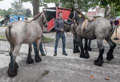 Wemmel, Jaarmarkt 2017 #4 (foto_morgana) Tags: animals belgique belgium belgië horses jaarmarkt2017 mammalia mammals mammifères outdoor säugetiere wemmel zoogdieren