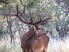 Red Stag Hunt Argentina - Patagonia 38