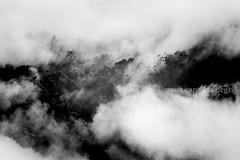 Serras gaúchas (ACNegri) Tags: serra gaucha gaucho rio grande do sul rs brasil brazil brazilian brazilians brazilianbeauty frio inverno winter autumn outono photography photojournalism photosbyannacarolinanegri travel trip viagem viajar