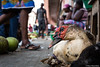 Market life. (bush_cow) Tags: africa saotome duck market africanmarket travel closeup canon canon6d streetphotography people animals ngc