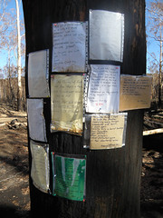 Poems pinned to a burnt tree at the bridge across Arthurs Creek, Chadds Creek Road, Strathewen; Wednesday, 18 March, 2009 (Yarra Plenty Regional Library Local History) Tags: messages fire damage black saturday bushfires 2009 poems chadds creek road victorian strathewen dickinson collection blacksaturdaybushfires2009 chaddscreekroad dickinsoncollection firedamage victorianbushfires victoria australia au