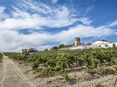 VENDIMIA (BLAMANTI) Tags: viñedos viñas vinos viticultura vendimia verano verde cielo castillo azul nubes monumentos antiguo