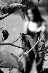Sichtweisen - Der Reiz der Unschärfe - (One-Basic-Of-Art) Tags: tfp timeforprint trimeforpicture feminine female weibchen frau woman girl person human mensch people zeitfürabzüge bayern deutsch deutschland fotografie canon photography anne woyand annewoyand 1basicofart onebasicofart bw sw mono einfarbig monochrom monochrome black white schwarz weis weiss grau gris grey noir blanc unscharf unschärfe focus fokus nature natur outdoor