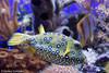 IMG_0726 (10Rosso) Tags: acqua acquario genova pesci pesce mare acquariodigenova aquarium genovaacquarium