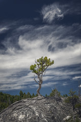 Tree on Rock, Mammoth Hot Springs (Yellowstone NP) (Kᵉⁿ Lᵃⁿᵉ (Instagram: @CarShowShooter)) Tags: geo:lat=4496584882 mammoth unitedstates usa geo:lon=11071280457 geotagged adventure clouds depthoffield dof exploring httpsenwikipediaorgwikiyellowstonenationalpark httpswwwnpsgovyell landscape mammothhotsprings nationalpark nationalparkservice naturalwonder nature pinetree rock rocktree scenic sky tourism touristattraction travel travelblog travelphotography travelingadventures tree treeonrock usnationalpark usnationalparkservice unitedstatesnationalpark upperterraceloopdrive worldadventures worldtravel worldsfirstnationalpark wy wyoming yellowstone yellowstonenationalpark yellowstonenp ynp