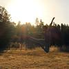 Jumping two (CI !) Tags: jump saltando saltar ballet balletdancer balletboy maledancer sun sunset sunlight sunshine field guy