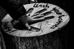 Wish (Davedub05) Tags: explore flickr d7000 nikon fingers picture blackandwhitephotos tree hand wish wood blackwhite monochrome tokina child