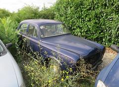 Peugeot 403 (Spottedlaurel) Tags: peugeot 403 peugeot403