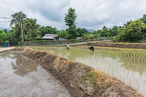 doi inthanon - thailande 60