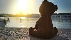 Teddy bear in the pier (SouthernScene) Tags: solo triste oso muelle puerto atardecer peluque soledad libre pajsaje mar agua barcos viajar panorama spain