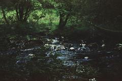 River 8 (avenwildsmith) Tags: film 35mm nature devon countryside analog analogue kodak retinette 1b grain england britain wild wilderness river water dark shadow shadowy 35mmfilm kodakretinette1b