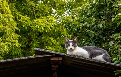 Fright (Denes Szucs) Tags: kitten green gray cat looks frightened pet lonely ivy fright summer house nature outdoor