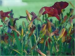 Red Lilies (novice09) Tags: lilies flowers hss slidersunday ipiccy pencilsketchapp