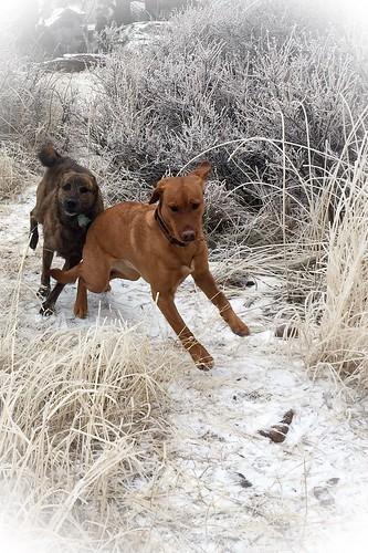 Photo - Bella and Beta