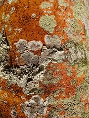 micro-cosmic (Michiko.Fujii) Tags: microcosm natureatitsbest upclose parklife outinthegreen treebark abstractimpressions southeastasia