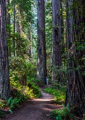 C&Coregon2017-41 (Ranbo (Randy Baumhover)) Tags: redwoodnationalpark redwoods california