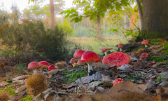 Gnome City (fire111) Tags: gnome city kabouterstad vliegenzwam fly agric amanita muscaria belgium red paddestoel witte bollen herfst autumn colors