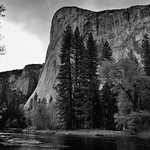 Just Beyond the Trees and Towering View of El Capitan (Black & White, Yosemite National Park) thumbnail