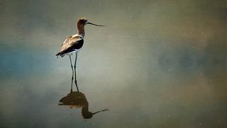 Lagoon Visitor