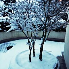 la prima nevicata 2017 - il bello dell'inverno (me, paolo and the seven wonders + two&little3) Tags: alberello neve picmonkey