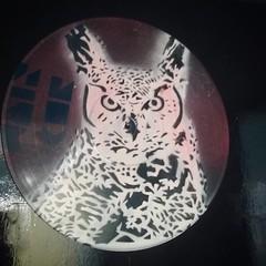 Owl on Vinyl (MAISxCOR) Tags: stencil stencilart art estencil vinil vinyl disco lp vinylart arteemvinil recycle decor maiscor owl coruja owlstencil