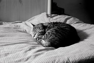 Take a snooze