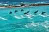 2011-Curacao-0188.jpg (Casal Partiu Oficial) Tags: curacao pontoturistico willemstad curacaodolphinacademy golfinho dolphin curaçao curação cw