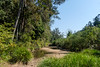 Little Yabba Creek at Charlie Moreland camping area (Allan Bowen) Tags: imbil stateforest kenilworth queensland australia au