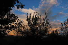golden clouds (Anny-justme) Tags: nature clouds black silhouette blue sky sunset twilight mystic yellow orange rainbow lovely light autumn trees branches fall leaves weather evening time dusk outdoor landscape hidden