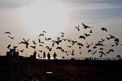 DSC_0404 (hkrajashekar) Tags: sunriseflight flight besantnagarbeach chennai colour colours clouds sunrise birds tamilnadu travel tourism nikon hkr rajashekar southindia sh