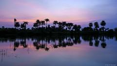 Light is King! (Neha & Chittaranjan Desai) Tags: india monsoon twilight lake palm trees colors sky gujarat surat landscapes