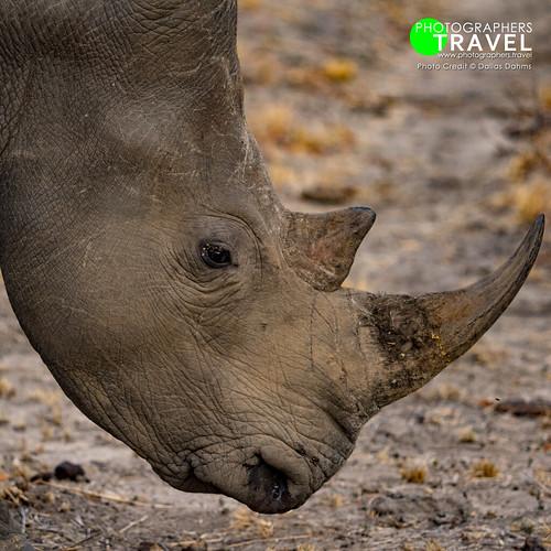 White Rhino - Sabi Sabi 2017