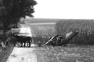 P1100254b&w Amish at the harvest