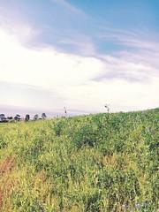 (katiegesseck) Tags: iphone landscape nature palosverdes green sky grass