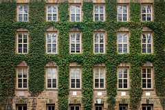 Ivy & Architecture (Darren LoPrinzi) Tags: 5d canon5d nj canon miii princeton princetonnj princetonuniversity ivy green school university newjersey architectural college institution