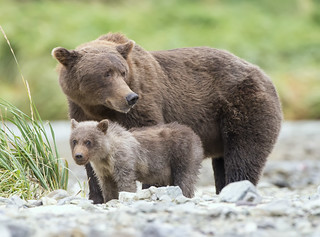 Mom and her baby cub