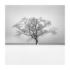 winter's calligraphy (StephenCairns) Tags: lakebiwa snow winter lake japan calligraphy storm deep cold quiet still