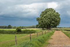 Vilsteren (Chantal van Breugel) Tags: landschap zomer vilsteren overijssel juli 2017 canon5dmark111 canon70300
