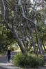 Walk at Fingal (vk2gwk - Henk T) Tags: fingal bay portstephens nsw walk dog footpath trees