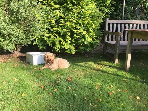 Poppy enjoying the morning sun