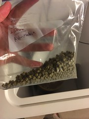 Medusa hops: adding the dry hop charge (found_drama) Tags: medusa medusaipa medusahops neomexicanus homebrew homebrewing essexjunction vermont vt 05452