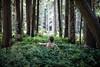 (ADAM RAGAN) Tags: cedars trees foliage facingaway solitude single solo adam man forest woods wilderness