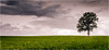 A scent of forest ... (Beppe Rijs) Tags: deutschland germany schleswigholstein schlei wolken wolkendecke landschaft landscape natur nature field feld gras baum tree horizont horizon clouds farbig colored line linie rural ländlich pastell fertile fruchtbar freshly frisch color farbe acker blue blau vivid lebhaft grün green scent forest geruch wald himmel sky licht light one einer many viele two zwei wood holz gehölz