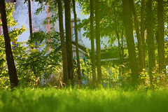 light (sopo_chinchaladze) Tags: light lights sunny sun sunlight grass green trees view summerdays helios canon