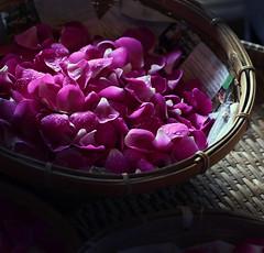 The orchid factory (Robyn Hooz) Tags: porpora petali testicoli orchidee thailandia vimini cesta luce light idroponica legend