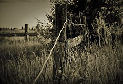 Don't fence me in (BreezyWinter) Tags: fencefriday fence summer july lines outside farm rural evening grass