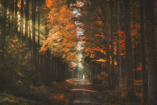 Blazing Forest (Retouch 2017 / HSS)